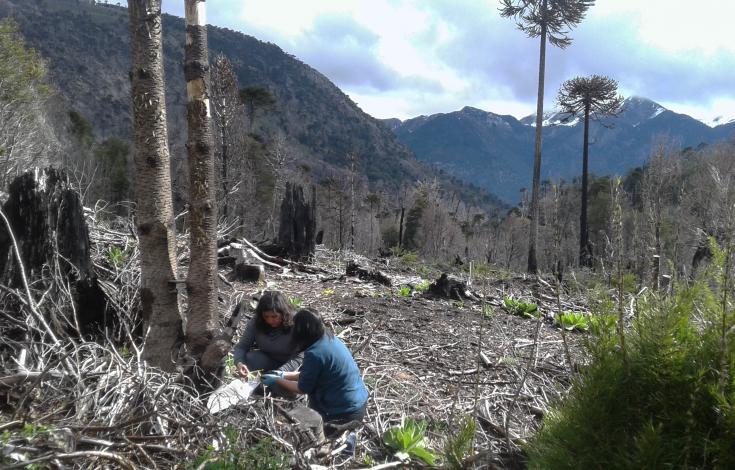 Reforestacion_III_OK