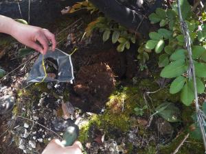 Un combinado de microorganismos podría contribuir a la reforestación de un bosque arrasado por el fuego.