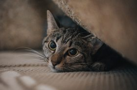 Mascotas y COVID-19: ¿Son parte de la cadena de contagio?