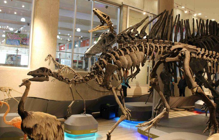 muestra dinosaurios zona franca