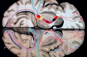Las mil y una historias del cerebro