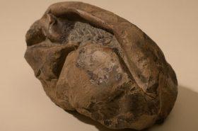 Científicos chilenos descubren el huevo más grande de la era de los dinosaurios