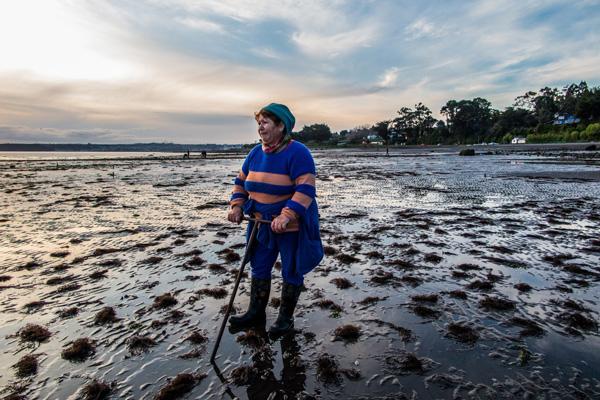 sembrando el mar web
