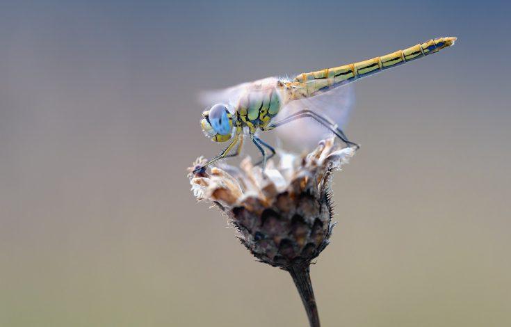 Insectos-1