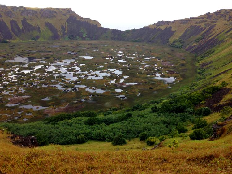 Rapa Nui y su flora nativa