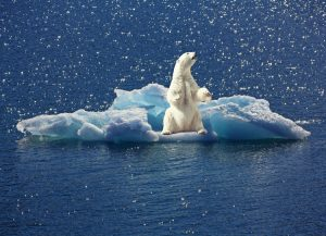 Cambio Climático: Derretimineto de los polos