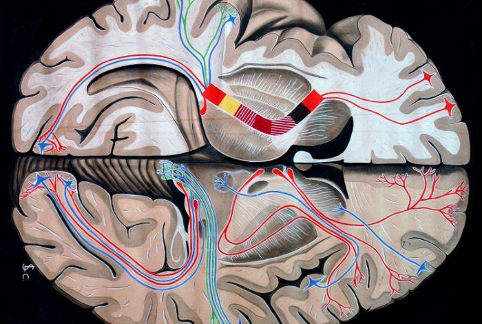 Libro 'DeMente: El cerebro, un hueso duro de roer'